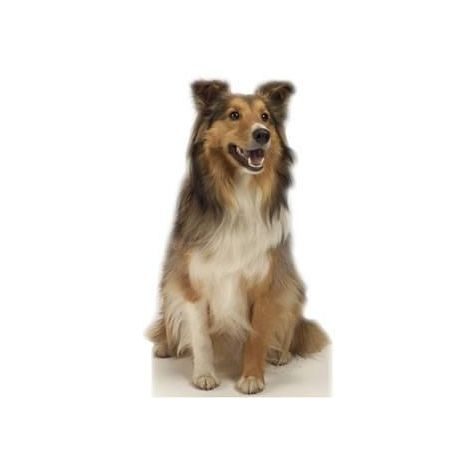 Collie the Dog Cutout #624