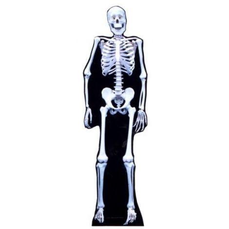Skeleton #193