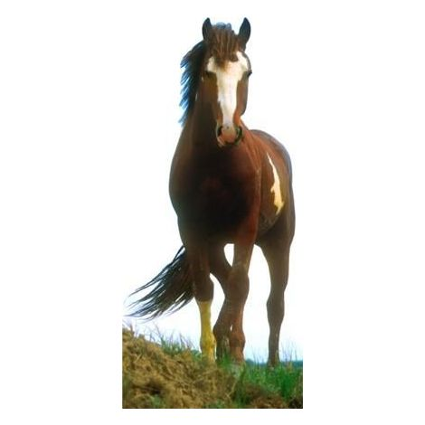 Mustang Horse Cutout 582