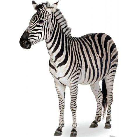 Zebra Lifesize cutout #1479