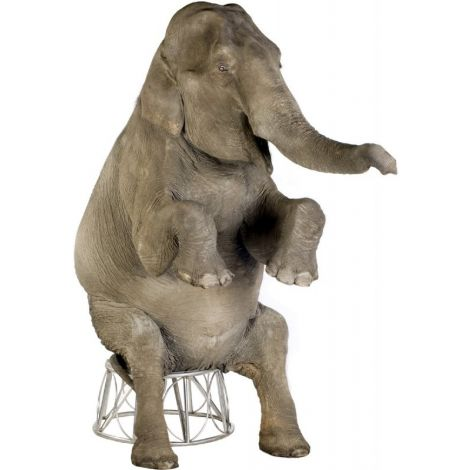 Asian Elephant Lifesize cutout #1480