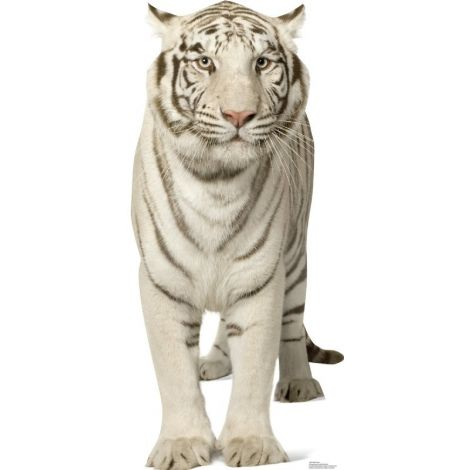 White Tiger Lifesize cutout #1481