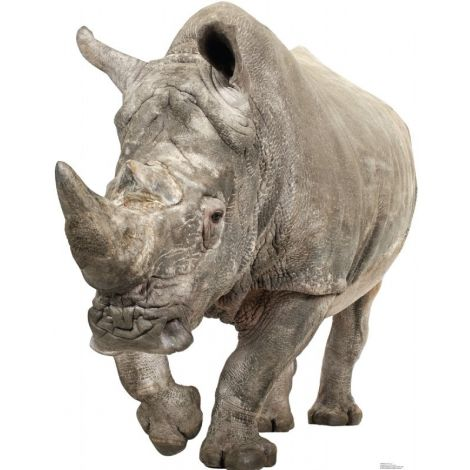 White Rhinoceros Lifesize cutout #1483