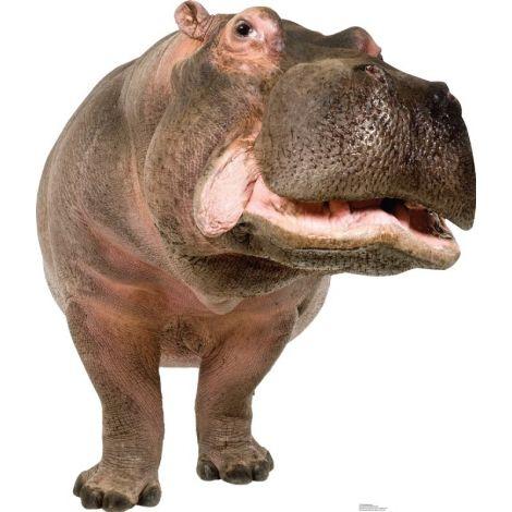 Hippopotamus Lifesize cutout #1484