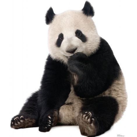 Giant Panda Lifesize cutout #1485
