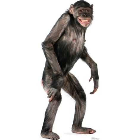 Chimpanzee Lifesize cutout #1487