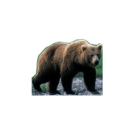 Grizzly Bear Cutout