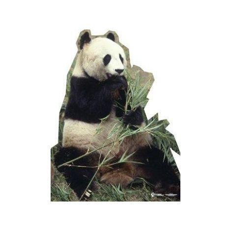 Panda Bear Photo Cutout