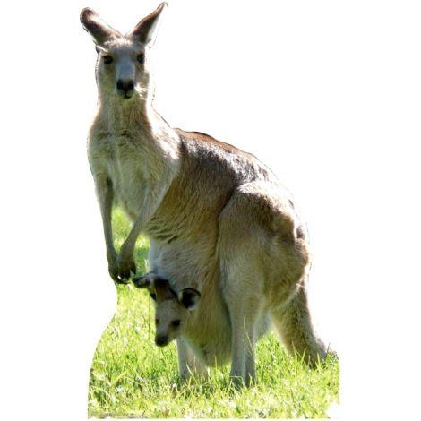 Kangaroo Standup #53
