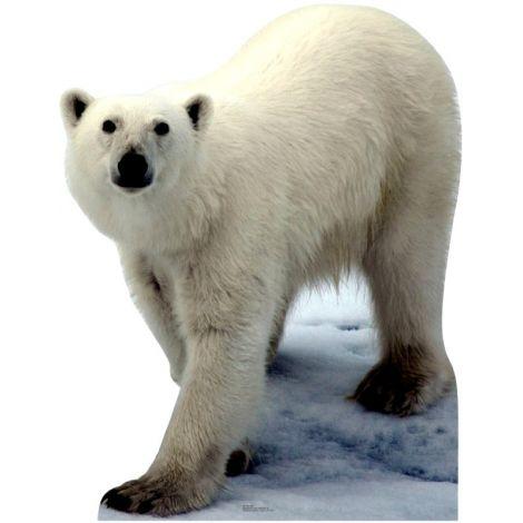 Polar Bear Standup#56