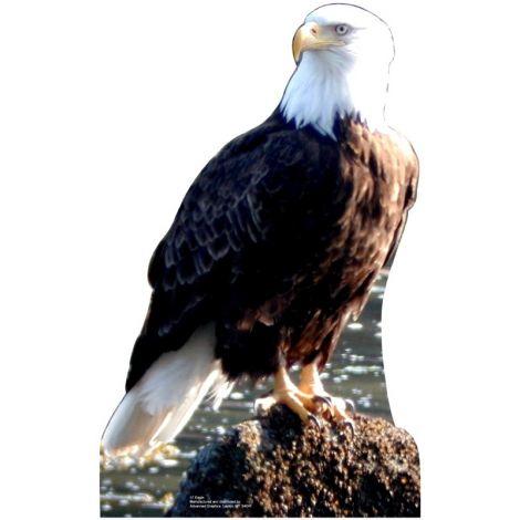 Bald Eagle Standup #57