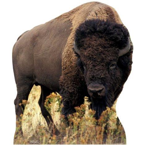 Bison Standup #59